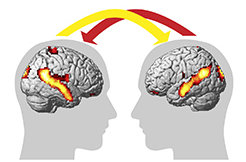 "This module teaches the scientific basis of social, cognitive and affective neuroscience. The areas of scientific enquiry covered in this module include social cognition, empathy, self-other discrimination, plasticity of ""Theory of Mind"", and the brain's default network. Another important aspect of this module is the analysis of the causes underlying psychopathologies of social cognition, early child development and culture, and the investigation of memory processes that allow us to function in the future."